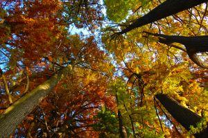 trees_autumn