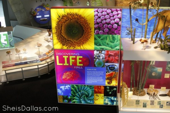New-Museum-in-Dallas-Perot