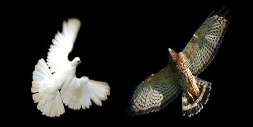 doves-hawks