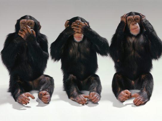 See-no-evil-hear-no-evil-speak-no-evil-monkeys-