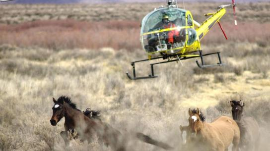 blm_helicopter