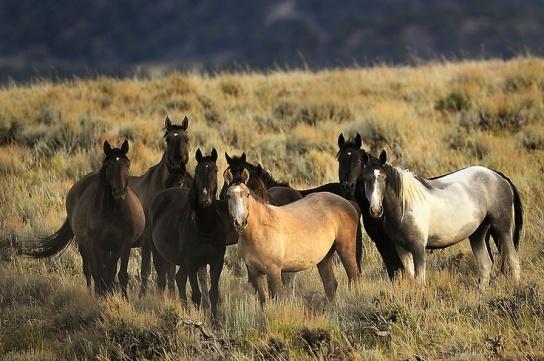 wild_horses_2